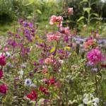 The stunning flora